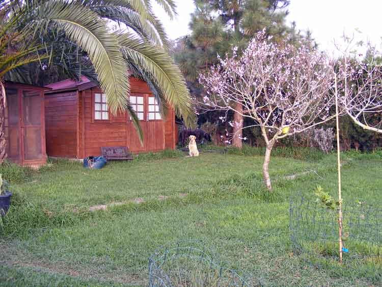 Immobilien Teneriffa Finca mit grossem Grundstück Ideal für die Familie! - Finca mit Grundstück von 2500 m2 mit Obstbäumen u. Haus mit drei Schlafz. in Tacoronte