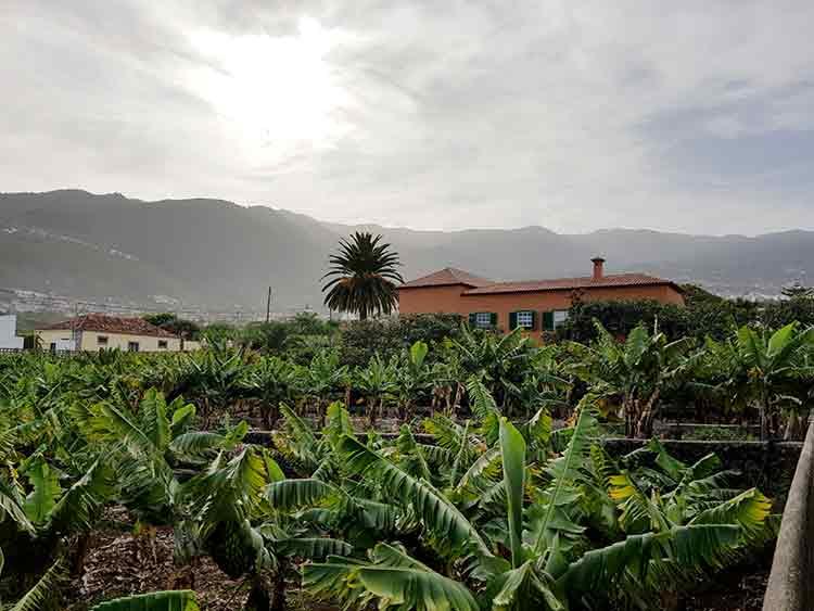 Charming  Finca  in a very good location in Puerto de la Cruz